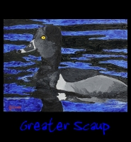 Greater Scaup - 30x40 Acrylic on Stretched Canvas with Black Gallery Wrap Border - Painting by Greg Schwab