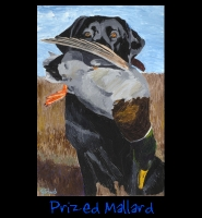 Prized Mallard - 24x36 Acrylic on Stretched Canvas with Image Wrap Border - Painting by Greg Schwab