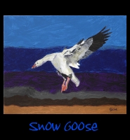 Snow Goose - 24x30 Acrylic on Stretched Canvas with Image Wrap Border - Painting by Greg Schwab