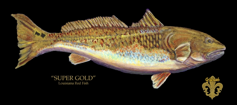Super Gold - Louisiana Red Fish